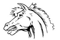 Horse Mascot Head Decal / Sticker 4