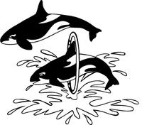 Killer Whales Mascot Decal / Sticker