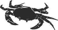 Crab Decal / Sticker