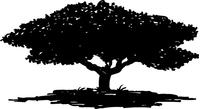 Tree Decal / Sticker 05