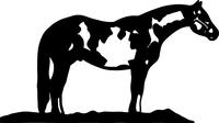 Horse Decal / Sticker 19