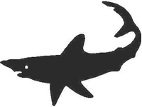 Shark Decal / Sticker 07