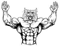 Weightlifting Wildcats Mascot Decal / Sticker 1