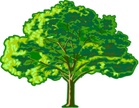 Tree Decal / Sticker 10