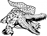 CUSTOM ALLIGATOR DECALS and CROCODILE STICKERS
