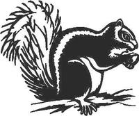 Squirrel Decal / Sticker
