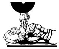 Weightlifting Bulldog Mascot Decal / Sticker 6