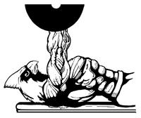 Weightlifting Cardinals Mascot Decal / Sticker 6