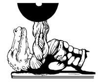 Weightlifting Gators Mascot Decal / Sticker 4