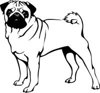 Pug Decal / Sticker 03