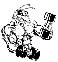 Weight Training Hornet, Yellow Jacket, Bee Mascot Decal / Sticker 5