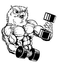Weightlifting Owls Mascot Decal / Sticker 2