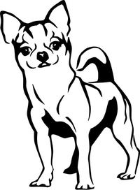 Chihuahua  Decal / Sticker 03