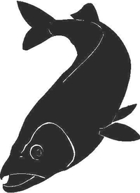 Fish Decal / Sticker 02