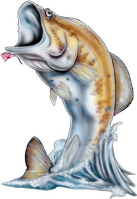 Bass 03 Fish Decal / Sticker
