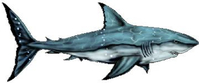 Shark Decal / Sticker 12