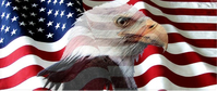 American Flag Bald Eagle Decal / Sticker 42