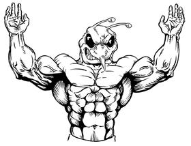 Weight Lifting Hornet, Yellow Jacket, Bee Mascot Decal / Sticker 01