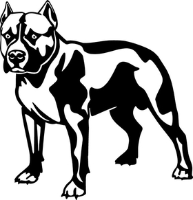 Pitbull Decal / Sticker 13