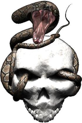 Snake Skull Decal / Sticker