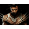 X-men Wolverine Decal / Sticker 04