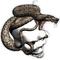 Snake Skull Decal / Sticker 03